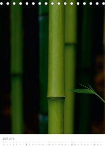Der Bambus