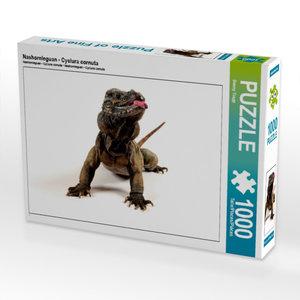 Nashornleguan - Cyclura cornuta 1000 Teile Puzzle quer