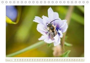 Bienen auf Sammeltour (Tischkalender 2018 DIN A5 quer)