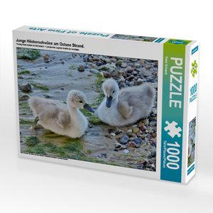 Junge Höckerschwäne am Ostsee Strand. 1000 Teile Puzzle quer
