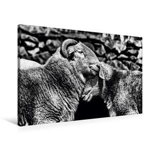 Premium Textil-Leinwand 90 cm x 60 cm quer Schafe