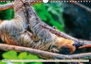 Abhängen - Faultier (Wandkalender 2019 DIN A4 quer)