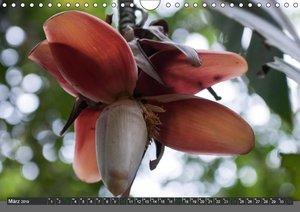 COSTA RICA - PURA VIDAAT-Version (Wandkalender 2019 DIN A4 quer)