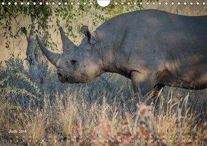 Nashörner - Afrikas seltene Dickhäuter
