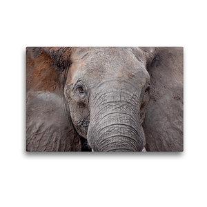 Premium Textil-Leinwand 45 cm x 30 cm quer Kasane Forest Reserve