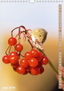 Zauberhafte Mäuse: Von wegen nur Grau