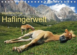 Wunderschöne Haflingerwelt