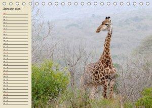 Afrika. Tiere in freier Wildbahn