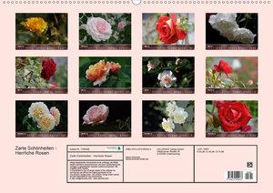 Zarte Schönheiten - Herrliche RosenCH-Version