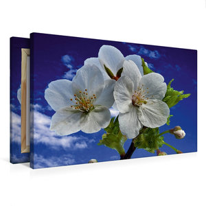 Premium Textil-Leinwand 75 cm x 50 cm quer Wildkirschblüte aus D
