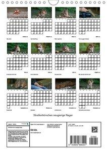 Streifenhörnchen - neugierige Nager (Wandkalender 2019 DIN A4 ho