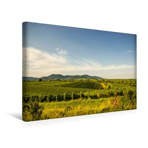 Premium Textil-Leinwand 45 cm x 30 cm quer Sonnenverwöhnte Reben