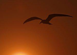Vogelwelten am Chobe (Posterbuch DIN A3 quer)