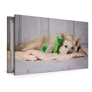 Premium Textil-Leinwand 120 cm x 80 cm quer Weißer Schäferhund