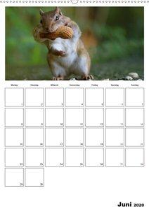 Streifenhörnchen - neugierige Nager