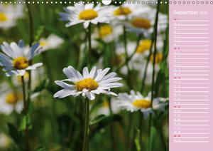 Blumenfreude (Wandkalender 2019 DIN A3 quer)