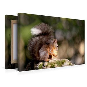 Premium Textil-Leinwand 45 cm x 30 cm quer Eichhörnchen knabbert