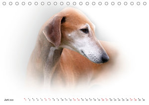 Windhund Portrait 2020 White Edition (Tischkalender 2020 DIN A5