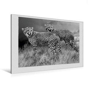 Premium Textil-Leinwand 120 cm x 80 cm quer Junge Gepardengeschw