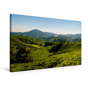 Premium Textil-Leinwand 75 cm x 50 cm quer Teeplantage