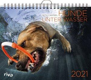 Hunde unter Wasser 2021