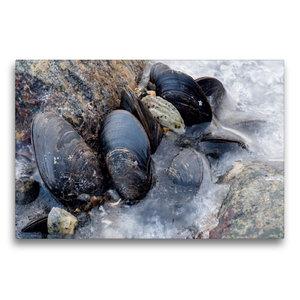 Premium Textil-Leinwand 75 cm x 50 cm quer Muscheln auf Eis