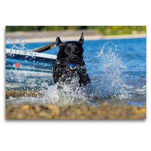 Premium Textil-Leinwand 120 cm x 80 cm quer Labrador Retriever -