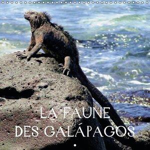 La faune des Galápagos (Calendrier mural 2015 300 × 300 mm Squar