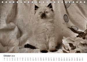 Oma\'s Katzenkalender 2018