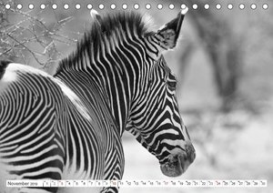Emotionale Momente: Zebras - black & white. (Tischkalender 2019