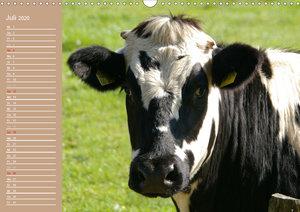 Kühe / Geburtstagskalender