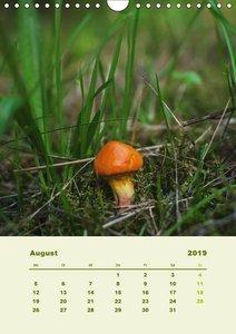 Wundersame Welt der Pilze (Wandkalender 2019 DIN A4 hoch)