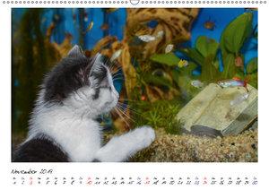 Die Launen der Katzen 2019 (Wandkalender 2019 DIN A2 quer)