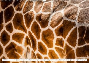 Emotionale Momente: Giraffen, die höchsten Tiere der Welt.
