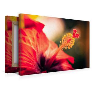Premium Textil-Leinwand 45 cm x 30 cm quer Hibiskus-Blüte, rot