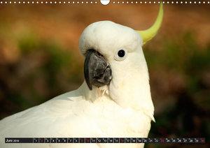 Vögel - Birds (Wandkalender 2019 DIN A3 quer)