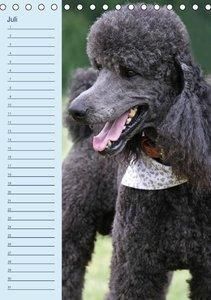 Pudel / Geburtstagskalender (Tischkalender immerwährend DIN A5 h