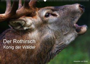 Der Rothirsch, König der Wälder