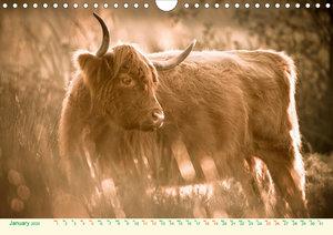 The Hairy Cow Calendar (Wall Calendar 2020 DIN A4 Landscape)