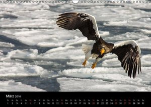 Seeadler - Könige der Lüfte (Wandkalender 2016 DIN A3 quer)