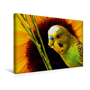Premium Textil-Leinwand 45 cm x 30 cm quer Naturwellensittich