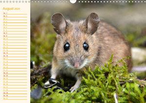 Grüsse von der Maus! (Wandkalender 2020 DIN A3 quer)