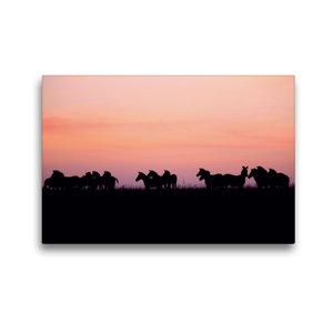 Premium Textil-Leinwand 45 cm x 30 cm quer Zebras in der Masai M