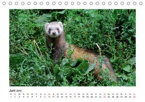 Tiere der Great Plains (Tischkalender 2019 DIN A5 quer)