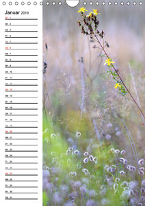 Lichtfänger (Wandkalender 2019 DIN A4 hoch)