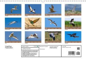 Vogelflug-Faszination (Wandkalender 2020 DIN A3 quer)