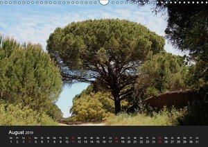 Baum Art (Wandkalender 2019 DIN A3 quer)