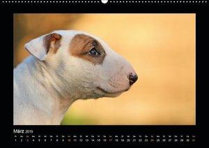 Allerlei Hundekinder (Wandkalender 2019 DIN A2 quer)