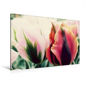 Premium Textil-Leinwand 120 cm x 80 cm quer Tulpen