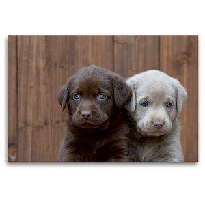 Premium Textil-Leinwand 120 cm x 80 cm quer Labrador Geschwister